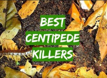 5 Best Centipede Killers