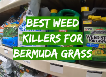 Best Weed Killers For Bermuda Grass