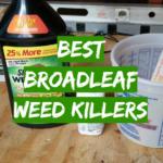 5 Best Broadleaf Weed Killers