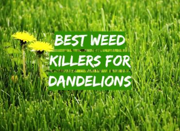 Best Weed Killers For Dandelions