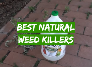 5 Best Natural Weed Killers