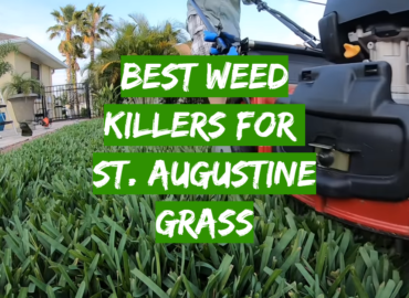 Best Weed Killers For St. Augustine Grass