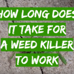 How Long Does it Take for a Weed Killer to Work