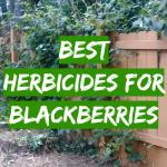 Best Herbicides for Blackberries