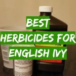 Best Herbicides for English Ivy