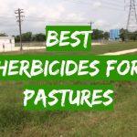 Best Herbicides for Pastures