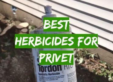 Best Herbicides for Privet