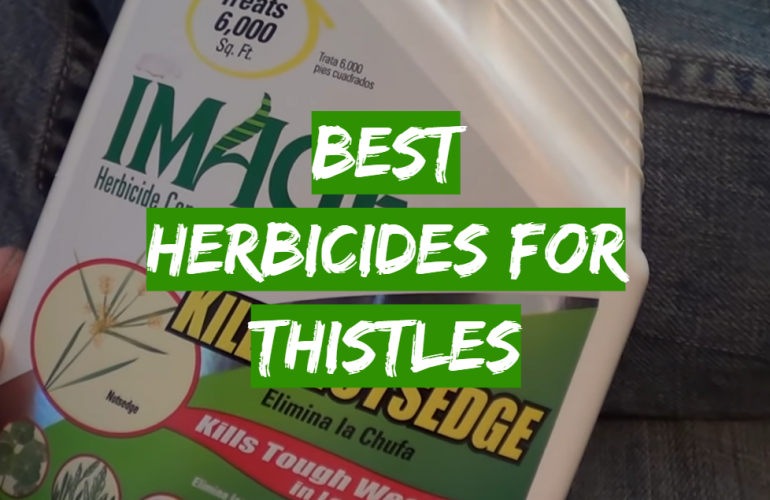 5 Best Herbicides for Thistles