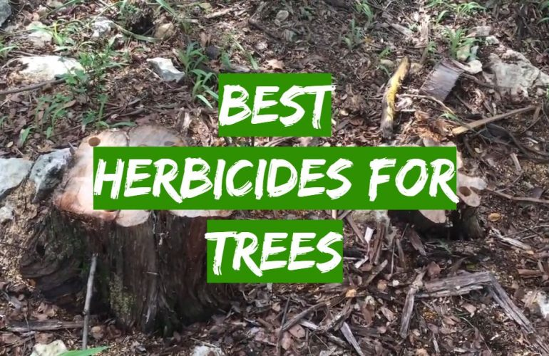 5 Best Herbicides for Trees
