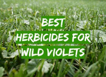 Best Herbicides for Wild Violets