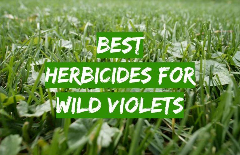 5 Best Herbicides for Wild Violets
