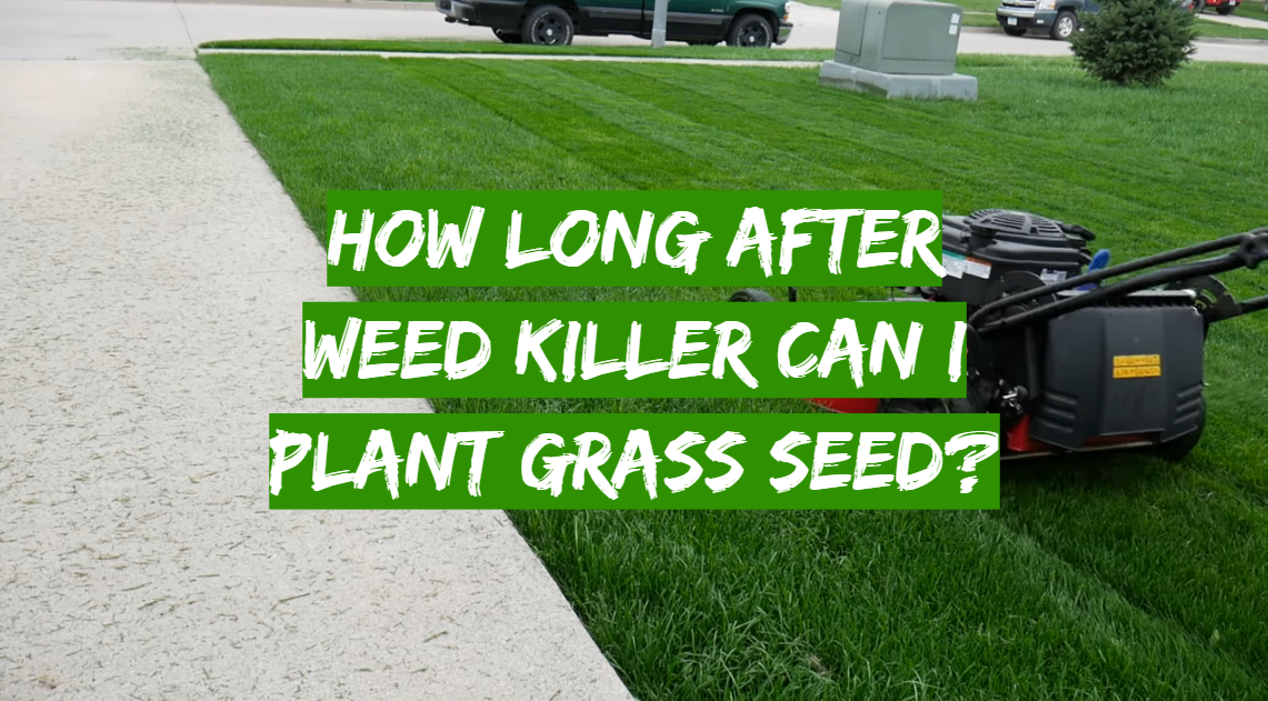 How Long After Weed Killer Can I Plant Grass Seed