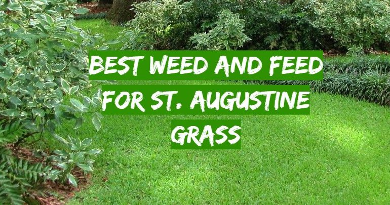 5 Best Weed and Feed for St. Augustine Grass