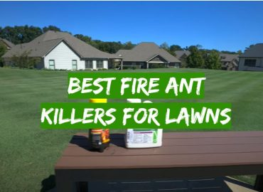5 Best Fire Ant Killers for Lawns