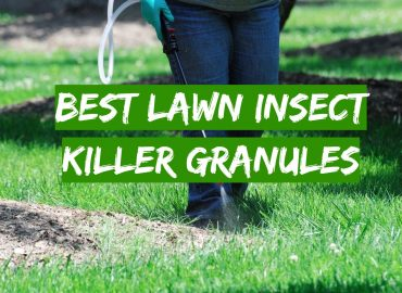 5 Best Lawn Insect Killer Granules